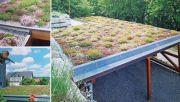 Beispielhafte Fotos eines bepflanzten Dachs